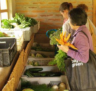 Kurikindi Organic Market