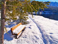 Winter Lakeside Bench