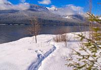 Winter Lakeside Scene